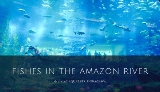 アクアパーク品川の通な楽しみ方♡アクアジャングルの獰猛な魚たち