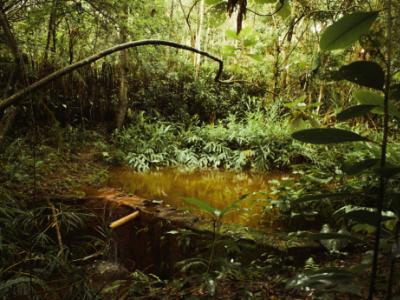 アクアジャングル