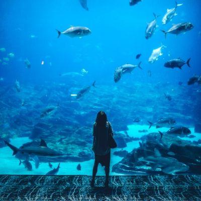 海の生き物を眺める女性