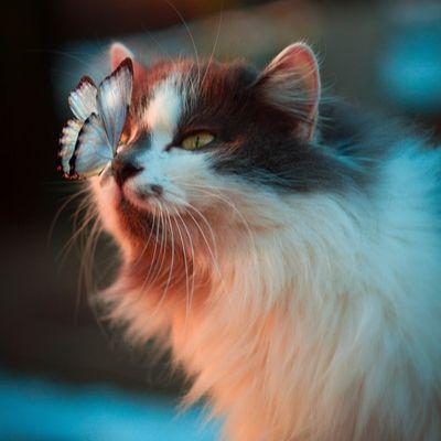 猫(BOSS)