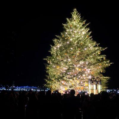 横浜赤レンガ倉庫の巨大クリスマスツリー