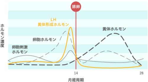 黄体形成ホルモン分泌量の推移