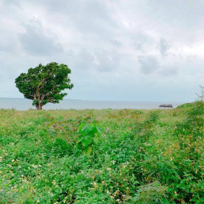 石垣島のお散歩コース