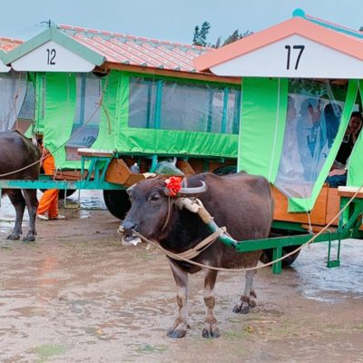 待機中の水牛車
