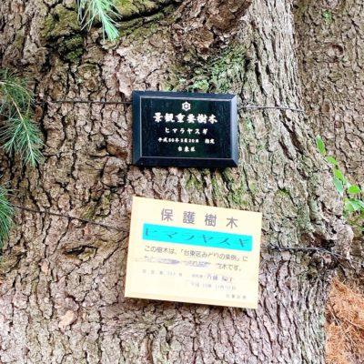 景観重要樹木