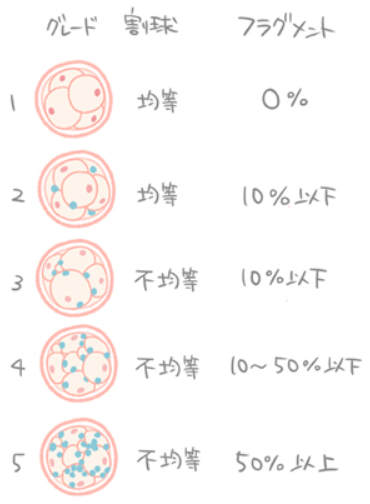 初期胚のグレード